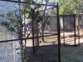 houston-zoo-cassowary-enclosure-2008-1