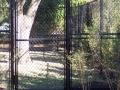 houston-zoo-cassowary-enclosure-2008-2