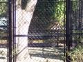 houston-zoo-cassowary-enclosure-2008-3